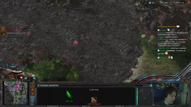 Stream by roxkisAbver - StarCraft II: Heart of the Swarm